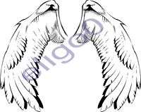 WINGS vinyl sticker Motorcycle Gas Tank or Car decal 12