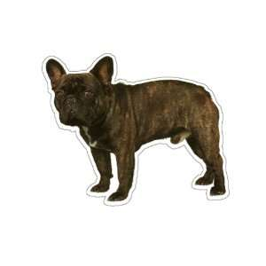 FRENCH BULLDOG   Dog Decal   sticker got bull window