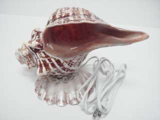 GIANT TRITON SEA SHELL NIGHT LIGHT TABLE LAMP #7491