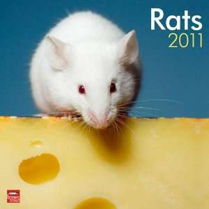 2011 Animal Calendars Rats   12 Month   30x30cm  Kitchen